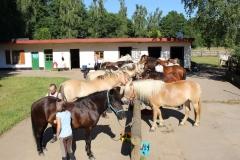 Unsere-Pferde