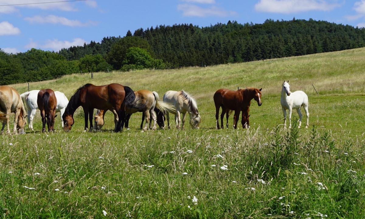 Pferde auf Weide_1200x721